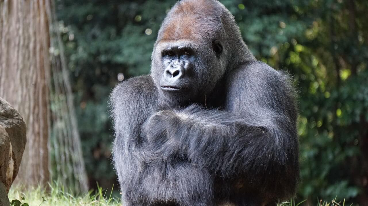 Is Gorilla Snot Gel bad for your hair